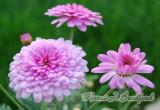 flowers16wtmk.jpg