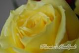 flowers18wtmk.jpg