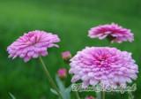 flowers17wtmk.jpg