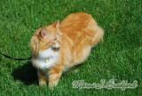 Catwtmk.jpg