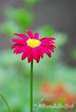 Flower30wtmk.jpg