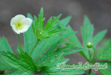 Flower36wtmk.jpg