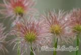 Flower42wtmk.jpg