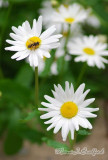 Flower32wtmk.jpg