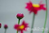 Flower34wtmk.jpg