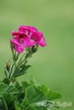 Flower41wtmk.jpg