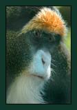 zoo monkey 03 06 web.jpg