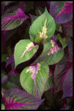 12xflower0805 web.jpg