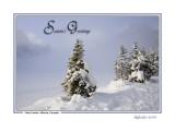Xmas Card 2006 F2.jpg