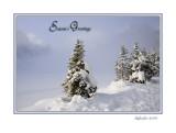 Xmas Card 2006 F.jpg