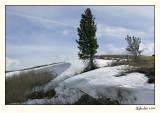 Yellowstone 07-APR12-0114.jpg