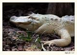 Alligator Farm 07-APR25-0852.jpg