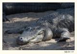 Alligator Farm 07-APR25-0859.jpg