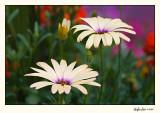 Flower  07-JUN21-013.jpg