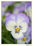 Flower  07-JUN21-031.jpg