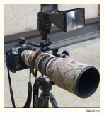 500f4 with flash bracket.jpg
