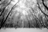 The neverending winter