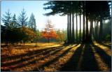 Cascade Morning