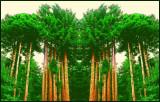 Redwoods Backyard