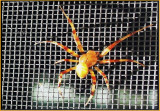 Screen Spider