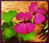 Paradise Hot Petals