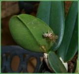Hopper Eats Bee 1