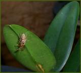 Hopper Eats Bee 3