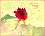 Said to the Rose