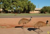 There's an Emu out the front.