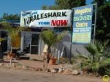 Exmouth Whaleshark tours Ningaloo reef