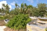 Kiritimati vegetation