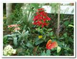 Orchid Garden, Tenerife.JPG