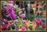 Favourite garden corner