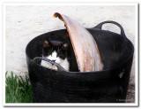 Blackie in Bucket.jpg