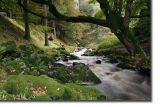 Waterfall1 copy.jpg