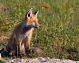 foxprintupload.jpg