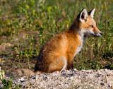 foxcupupload.jpg