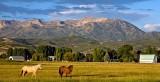 Horses Basking In The Early Morning Utah Sun