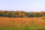 Meadow in Autumn