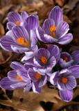 ...bring April flowers