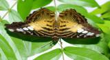 Butterflies 117.jpg