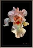 White Iris .jpg