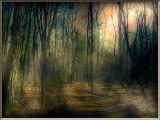 Foggy Woods.jpg