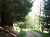 Laidon Forest
