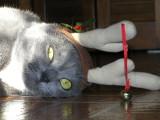 An Unhappy Rein-Cat