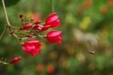 Flora in Grande Island