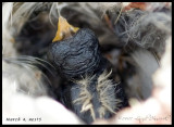 March 4, nest 5