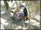 Feb 28, nest 6