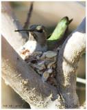 Feb 28, nest 5
