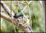March 6, nest 4